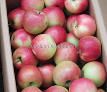 Green Color and Gala Variety bulk fresh apples
