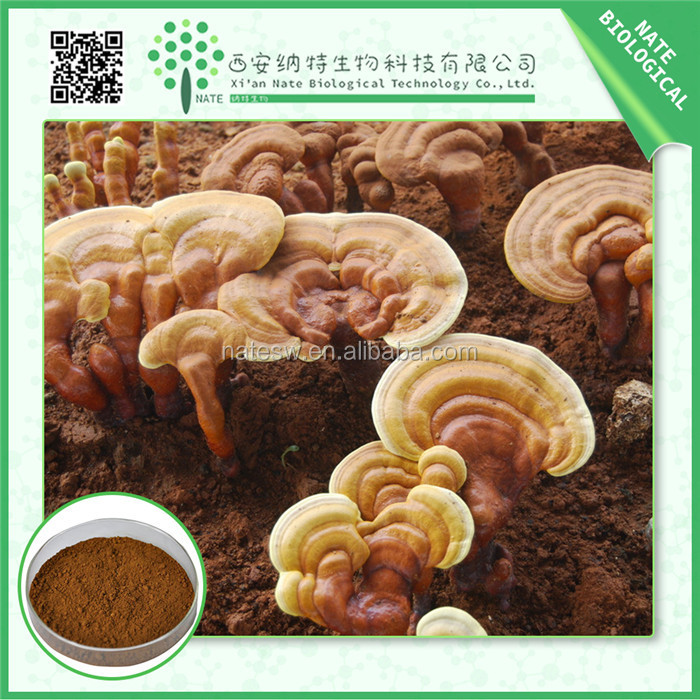Health food anti-cancer natural herbal Reishi Mushroom extract 30% polysaccharides