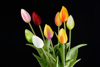43 cm PVC Real Touch Tulip Spray Artificial Flower