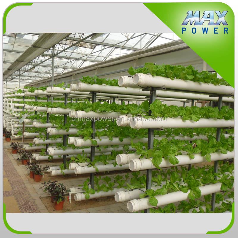 Выращивание укропа гидропонным методом 85