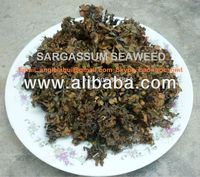 Dried sargassum seaweed (brown seaweed)