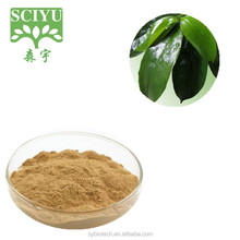 High quality Instant Dried Soursop leaves Graviola leaves soursop leaves tea powder