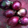 quality big and fresh red onions for export