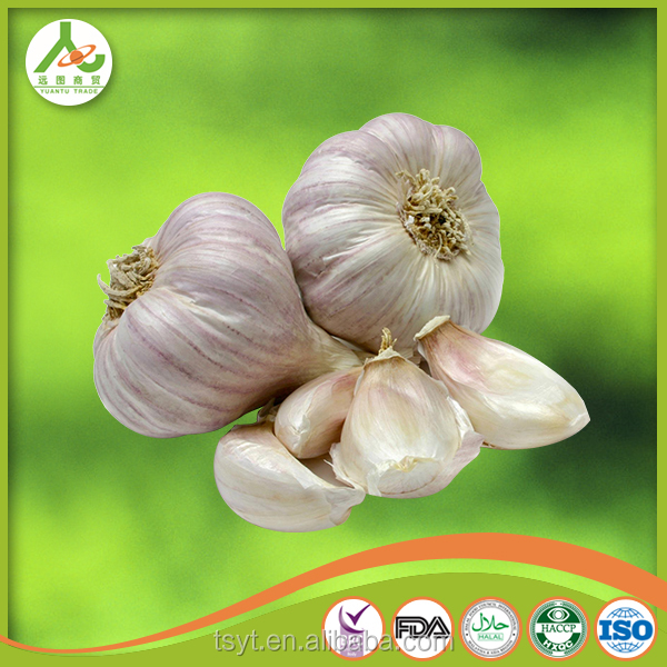 orginal source fresh garlic normal white 5cm for garlic paste in 20kg mesh bag FOB 620USD /MT karachi kelang thailand China