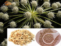 Quality guarantee Angelica Extract with 1% Ligustilide made in China