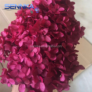 Wholesale Natural Fresh Cut Preserved Hygrangea Flowers As Wedding Gifts