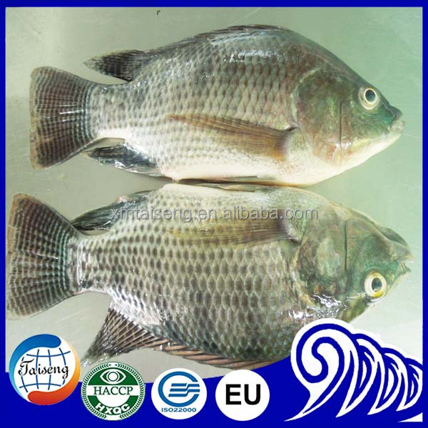 Good Quality Frozen Tilapia Whole with Whole Sale Price