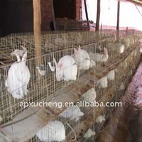 dove & rabbit cage manufacturer