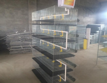 quail cage H type 5 tier trade assurance 5 tier or 6 tier quail cage for sale
