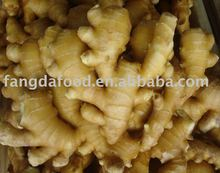 Fresh Ginger price in china