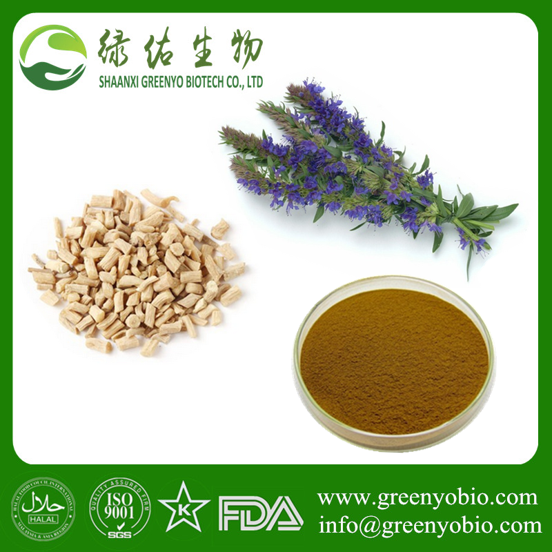 Factory supply Achyranthan /Hyssopus officinalis extract with best quality in stock