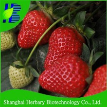 2018 Hot sale strawberry seeds for cultivating