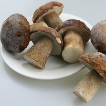 White porcini mushrooms frozen stuffed mushrooms