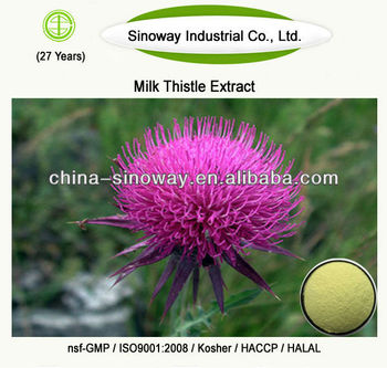 milk thistle extract silymarin,milk thistle extract silymarin silybin,80% silymarin milk thistle extract