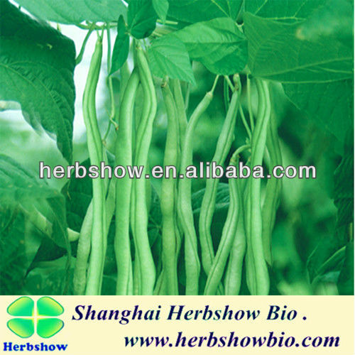 Chinese F1 Hybrid Green bean seeds for planting