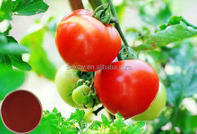 100% natural organic bottom price tomato extract improve skin texture