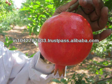 2014 High Quality Fresh Pomegranates Direct from Indian Farmer