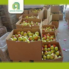 wholesale fresh green apples organic green apples fresh apples in bulk with low price