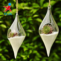 Haning Rugby Shape Glass Plant Terrarium