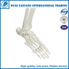 Artificial plastic human skeleton 200 bones of adult human skeleton model