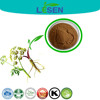 China manufacturer supply 100% natural Chinese herb Dong-Quai extract powder