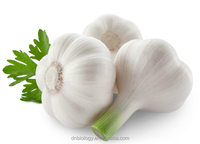 2016 Factory Supply High Quality 1%-25% Aged Garlic Extract