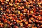 Crude Palm Oil cooking oil