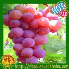 Table Grapes Fresh Grape Suppliers