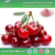 Factory supply pure quality and organic Acerola Cherry Extract , Acerola Cherry Extract Powder