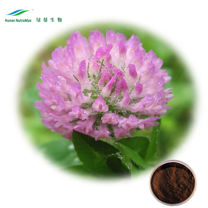 Free samples 2017 hot sale EU Standard organic biochanins 2.5% 8% 20% 40% isoflavone red clover extract