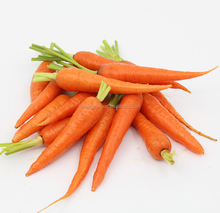 Chinese fresh orange red color carrot with size L