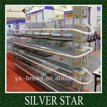 galvanized day old broiler chicks/chick brooder for sale
