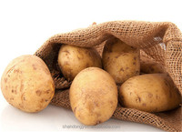 Chinese factory potato exporters