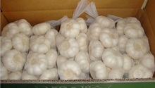 Fresh Pure white Garlic in 10kg carton