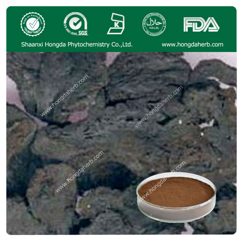 Pure Natural Rehmannia Root Plant Extract