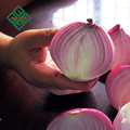 farm fresh red onion suppliers