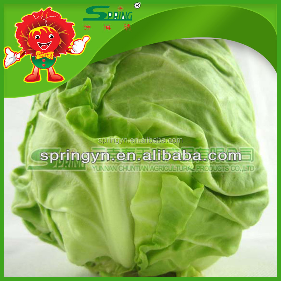 Top Quality fresh fruits and Vegetables Supplier, best Chinese cabbage