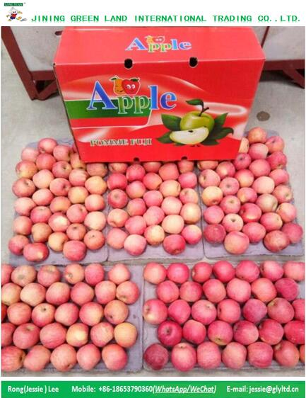 BEST SELLING SWEET FUJI APPLE FROM CHINA SHANDONG/SHANXI ORIGIN