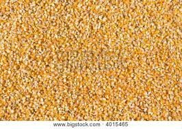 Yellow Corn for animal feed / human consumption