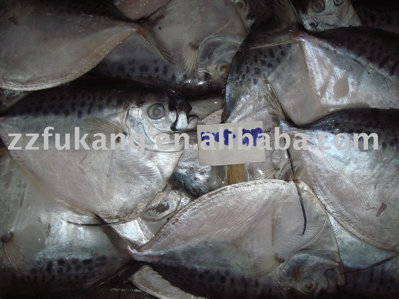 Frozen whole round moonfish