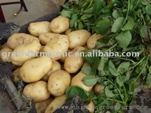 Supplying 2011 Fresh Holland Potatoes
