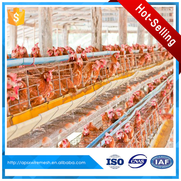 enriched colony system chicken battery cage