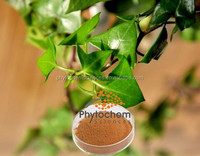 Natural Ivy plant extract for health