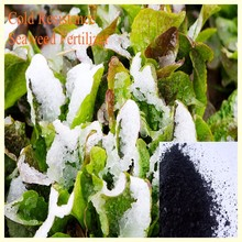 100% soluble seaweed extract foliar fertilizer for rice in agriculture