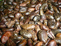 Ethiopia Roasted Cocoa and Coffe Beans Read for Export