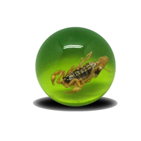 Acrylic beads with real animal /insects in resin