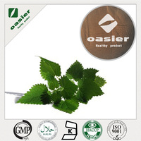 Nettle extract powder 100% natural no pigmenbt
