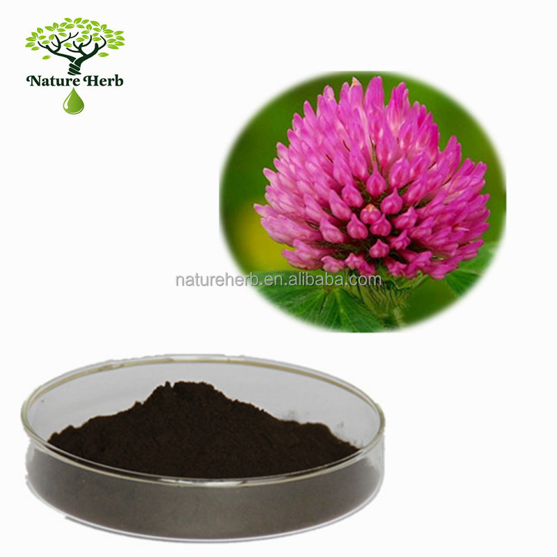 Bulk Supply Red Clover P.E. 10:1 Powder