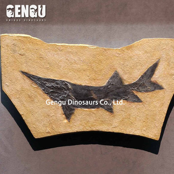Prehistoric Fish Fossil Replicas for sale