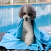 Super Absorbent & Softness PVA Chamois Pet Towel pva Drying cloth Chamois Cleaning Pet Towel